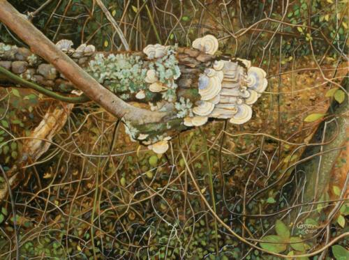 Undergrowth - Daniel Coston