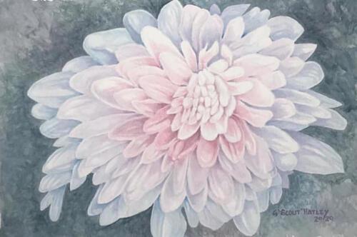 Chrysanthemum - Gerald Hatley