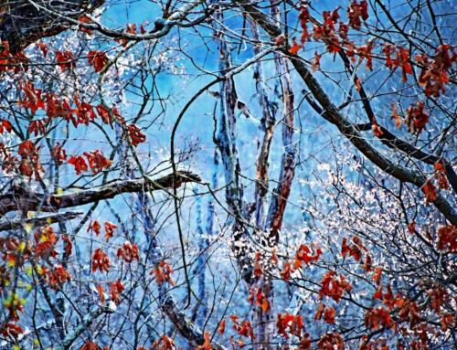 Awakening from Winter -Terry Dushan